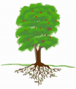 Appelboom 1